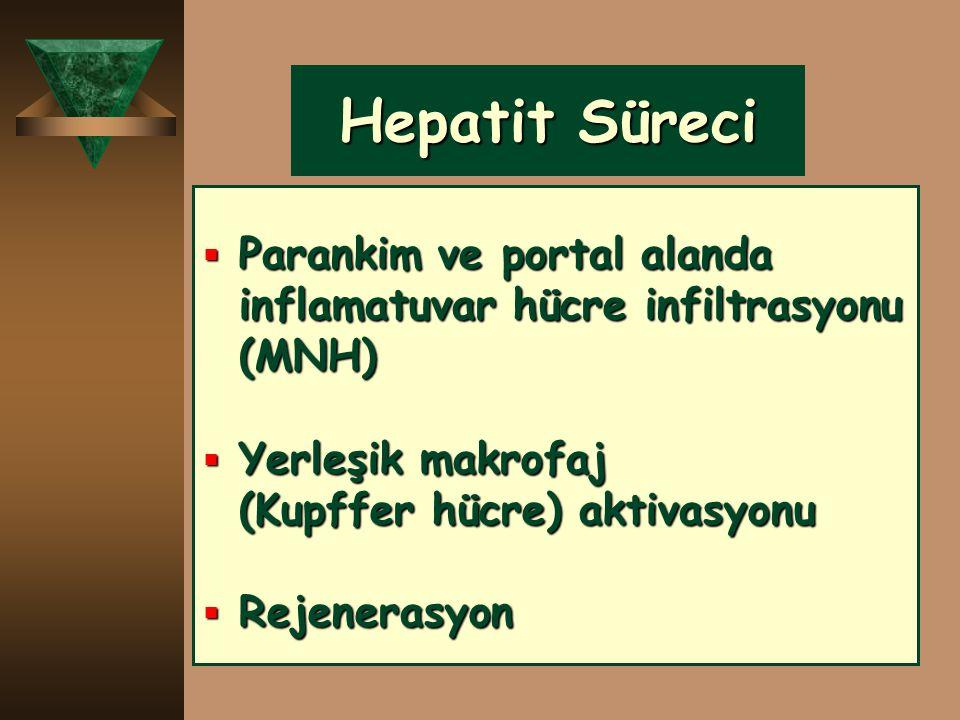 Hepatit Süreci Parankim ve portal alanda