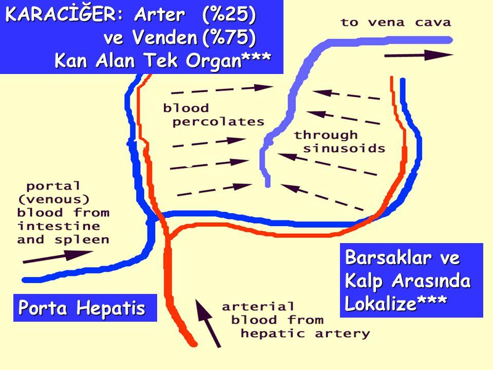 KARACİĞER: Arter (%25) ve Venden (%75) Kan Alan Tek Organ***