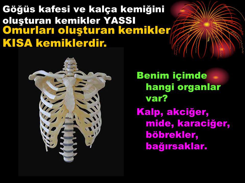 Göğüs kafesi ve kalça kemiğini oluşturan kemikler YASSI