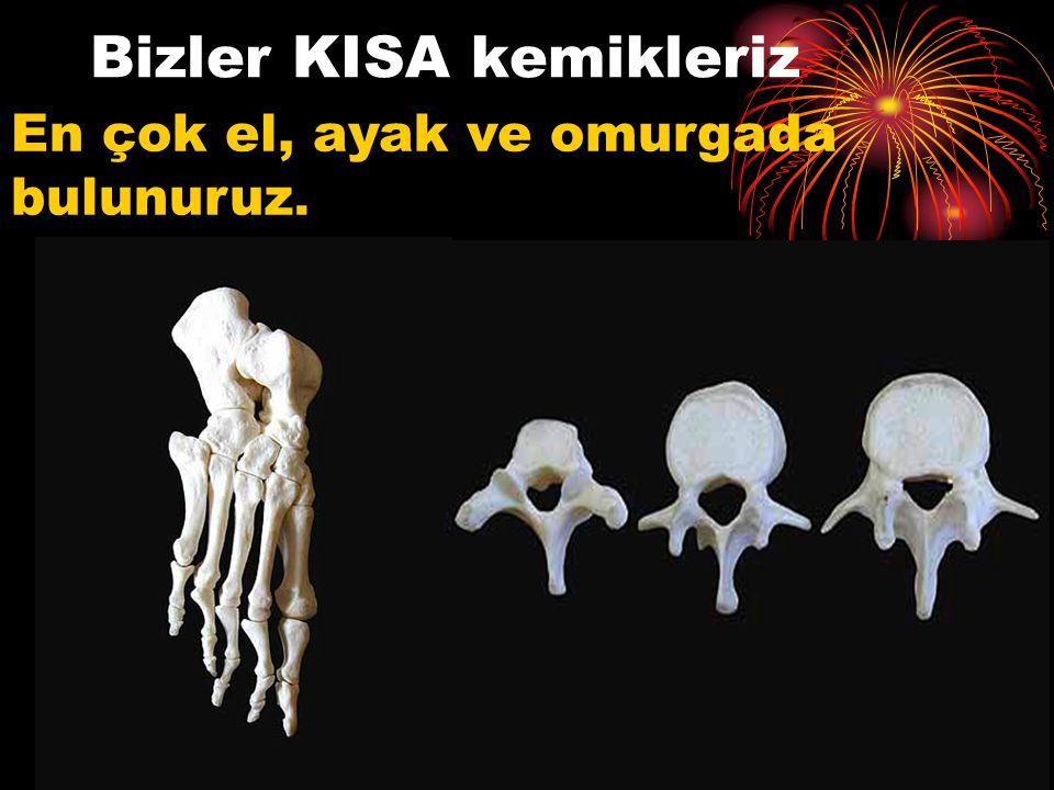 Bizler KISA kemikleriz