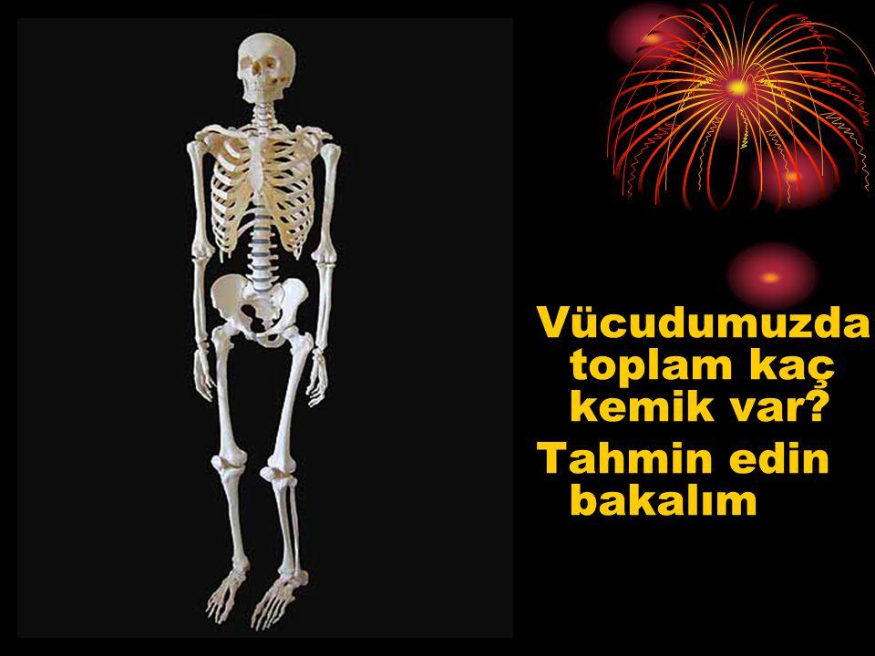Vücudumuzda toplam kaç kemik var