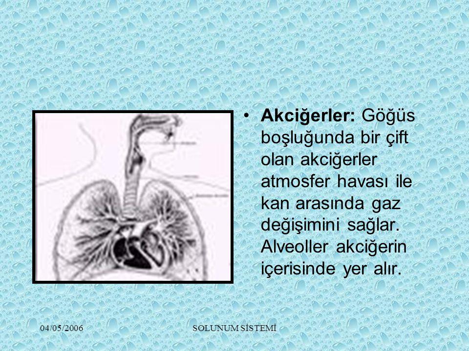 Akciğerler: Göğüs boşluğunda bir çift olan akciğerler atmosfer havası ile kan arasında gaz değişimini sağlar. Alveoller akciğerin içerisinde yer alır.
