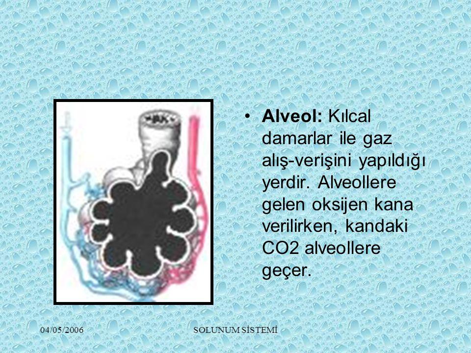 Alveol: Kılcal damarlar ile gaz alış-verişini yapıldığı yerdir