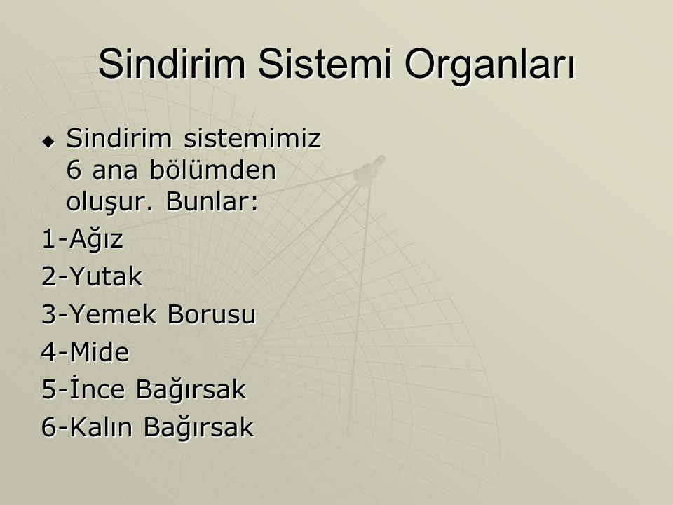 Sindirim Sistemi Organları