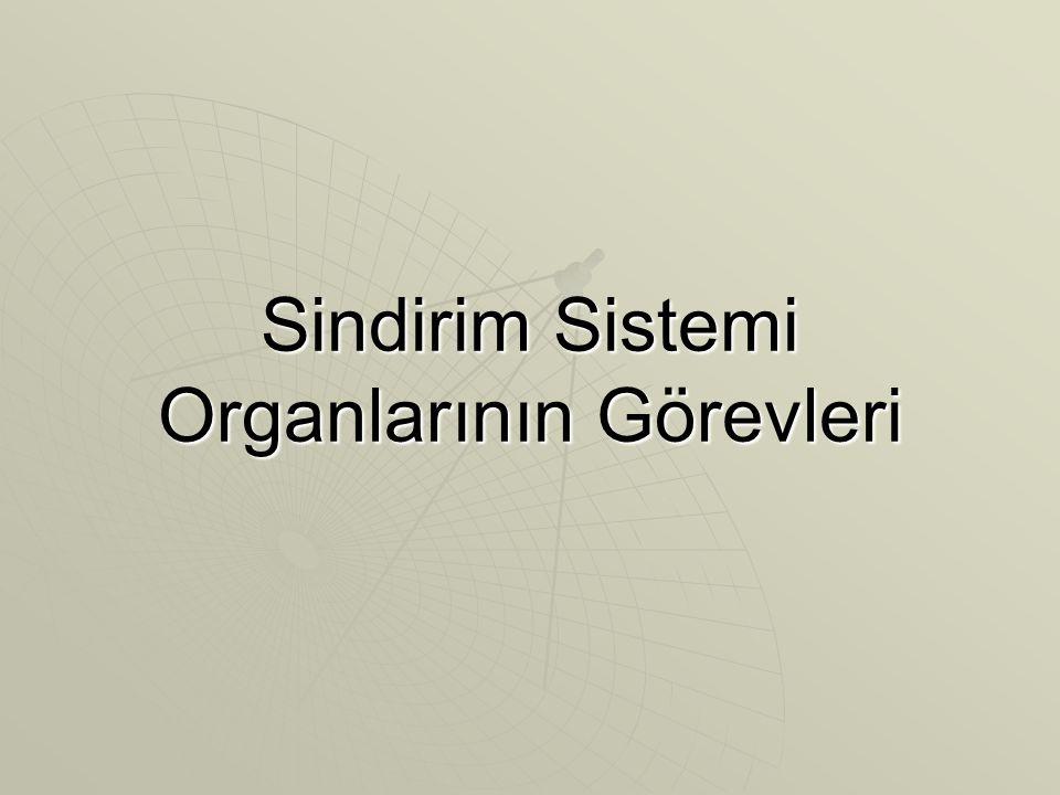 Sindirim Sistemi Organlarının Görevleri