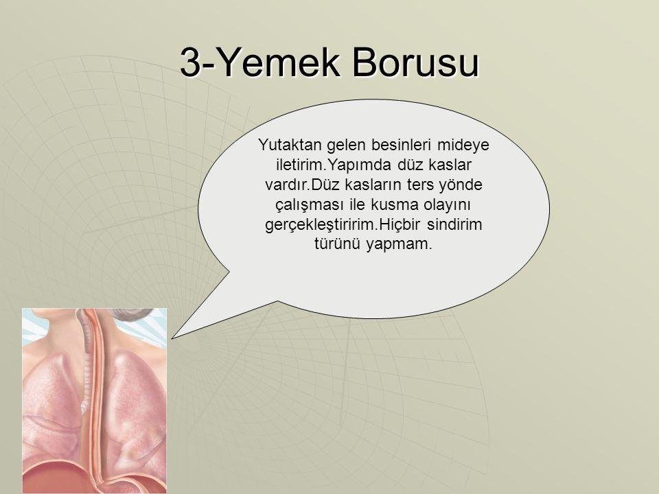 3-Yemek Borusu