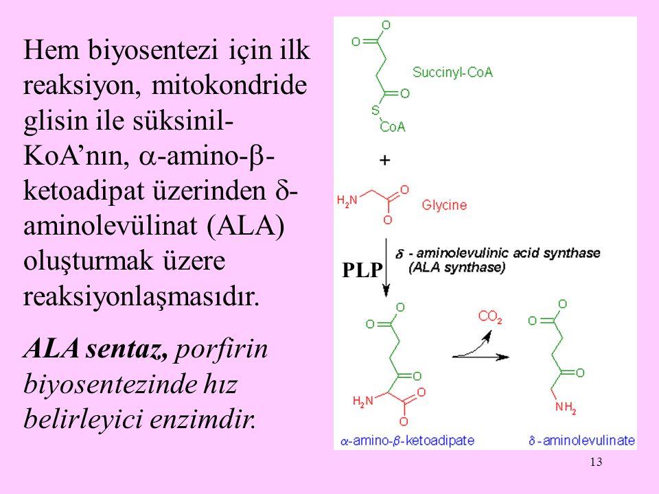 ALA sentaz, porfirin biyosentezinde hız belirleyici enzimdir.