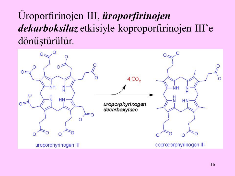 Üroporfirinojen III, üroporfirinojen dekarboksilaz etkisiyle koproporfirinojen III'e dönüştürülür.