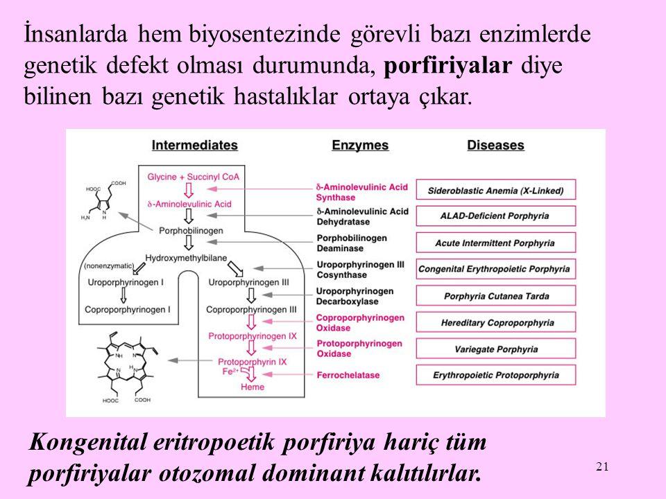 İnsanlarda hem biyosentezinde görevli bazı enzimlerde genetik defekt olması durumunda, porfiriyalar diye bilinen bazı genetik hastalıklar ortaya çıkar.