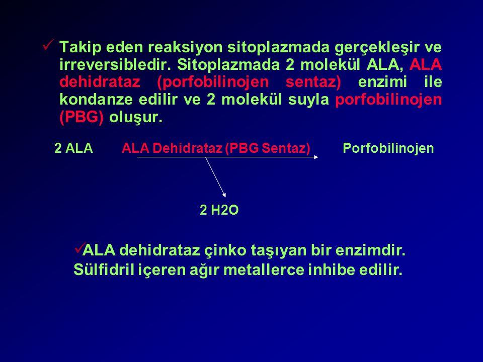 Takip eden reaksiyon sitoplazmada gerçekleşir ve irreversibledir