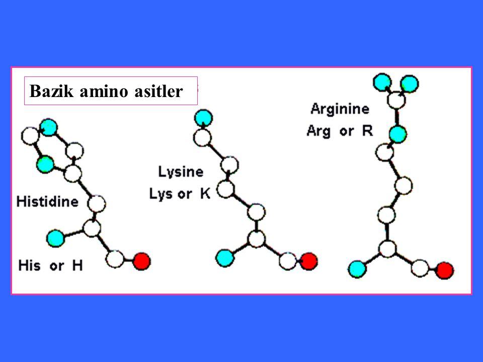 Bazik amino asitler