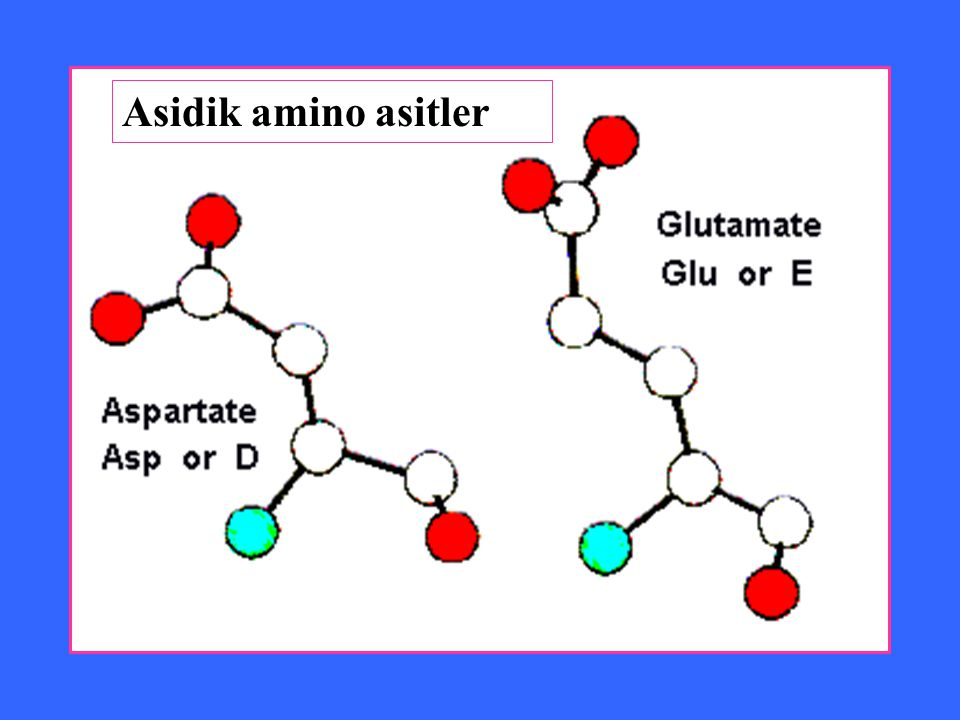 Asidik amino asitler