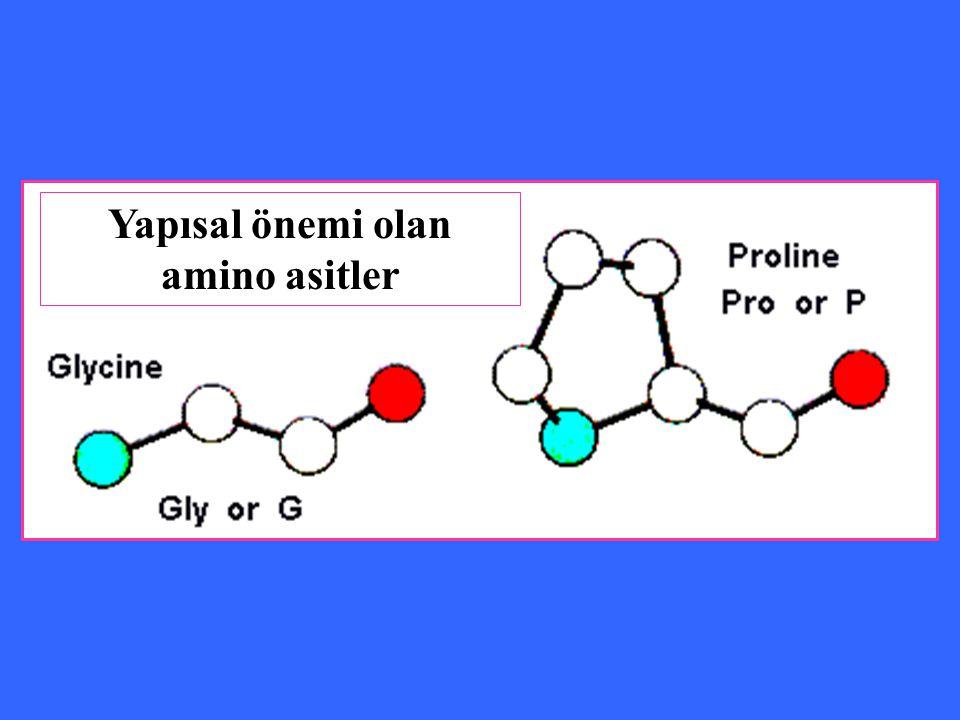 Yapısal önemi olan amino asitler