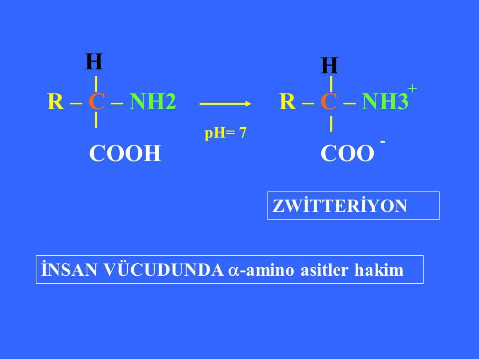 COOH H H R – C – NH2 R – C – NH3 COO ZWİTTERİYON