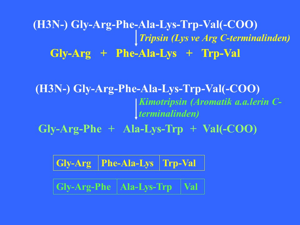 (H3N-) Gly-Arg-Phe-Ala-Lys-Trp-Val(-COO)