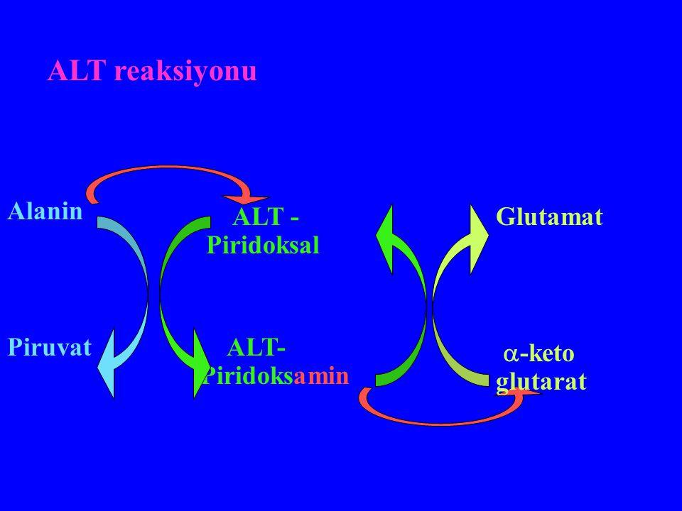 ALT reaksiyonu Alanin ALT -Piridoksal Glutamat Piruvat