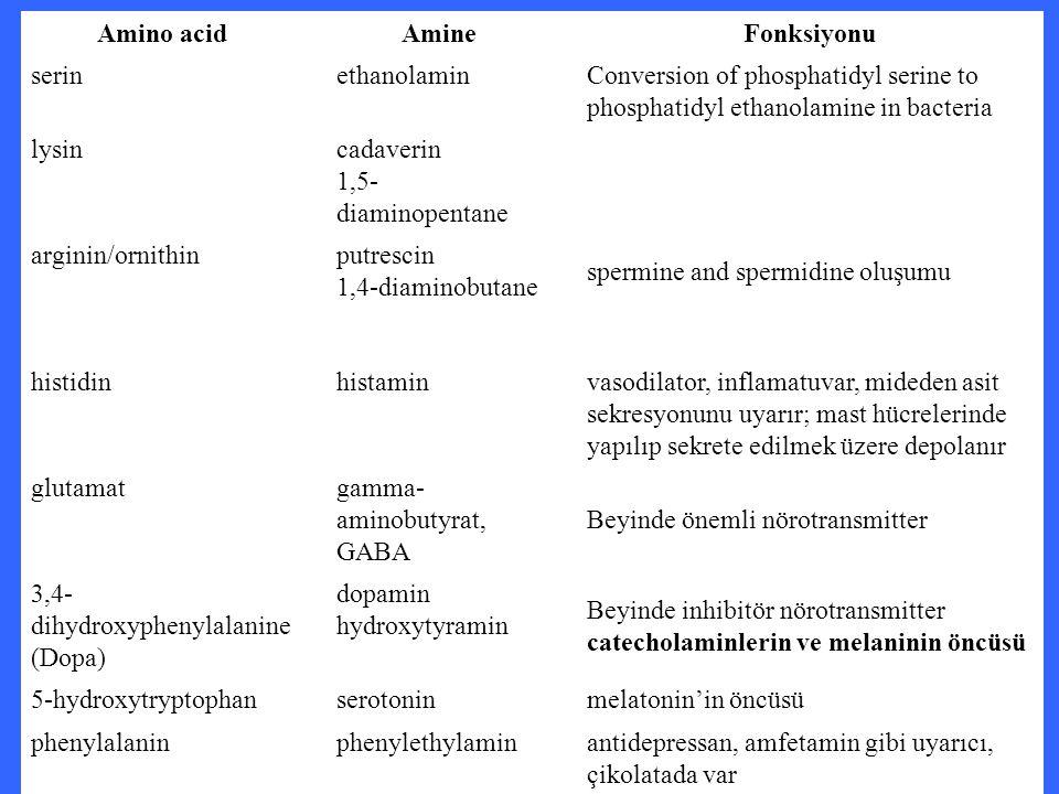 Amino acid Amine. Fonksiyonu. serin. ethanolamin. Conversion of phosphatidyl serine to phosphatidyl ethanolamine in bacteria.