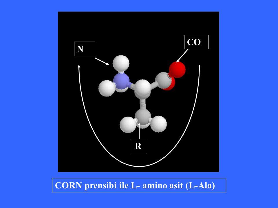 CO N R CORN prensibi ile L- amino asit (L-Ala)