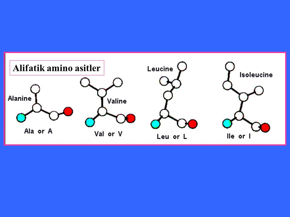 Alifatik amino asitler