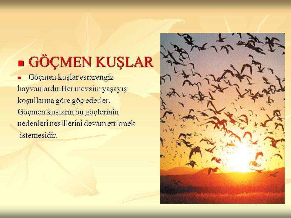 GÖÇMEN KUŞLAR Göçmen kuşlar esrarengiz hayvanlardır.Her mevsim yaşayış