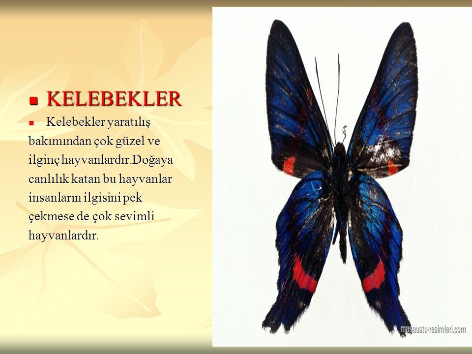 KELEBEKLER Kelebekler yaratılış bakımından çok güzel ve