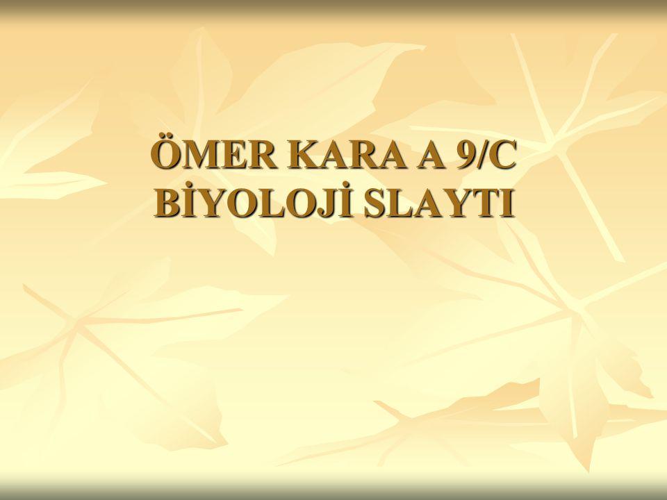 ÖMER KARA A 9/C BİYOLOJİ SLAYTI