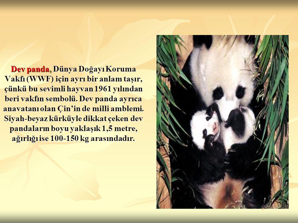 Dev panda, Dünya Doğayı Koruma Vakfı (WWF) için ayrı bir anlam taşır, çünkü bu sevimli hayvan 1961 yılından beri vakfın sembolü.