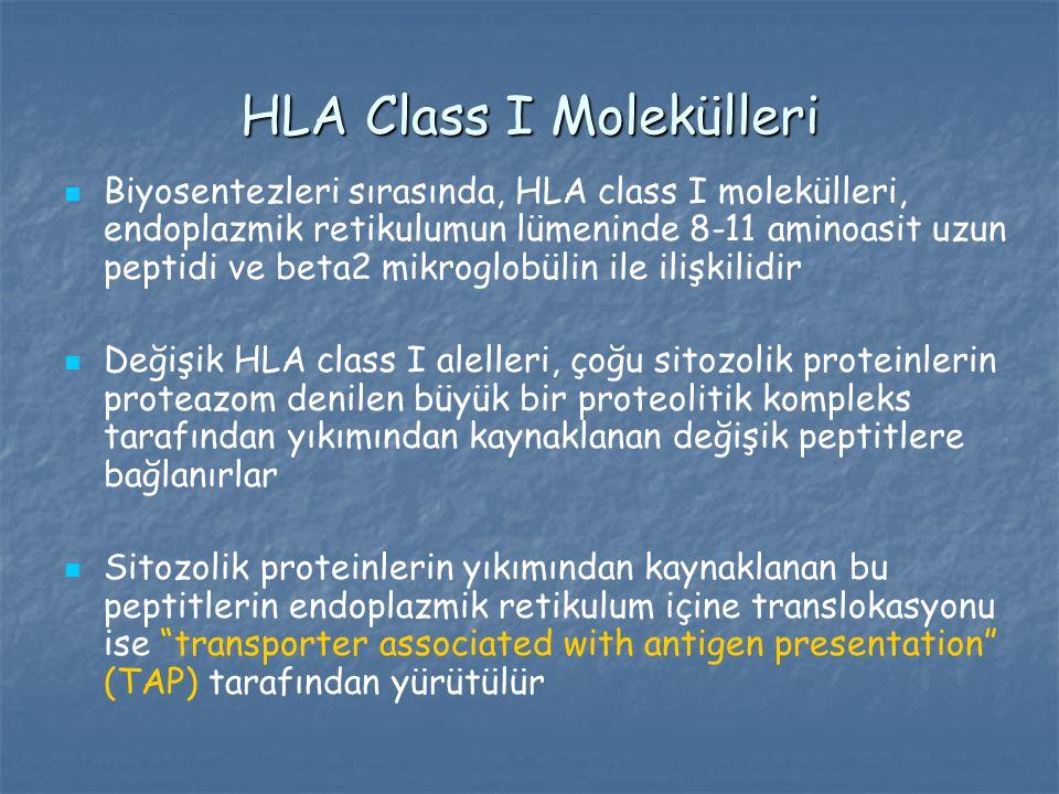 HLA Class I Molekülleri