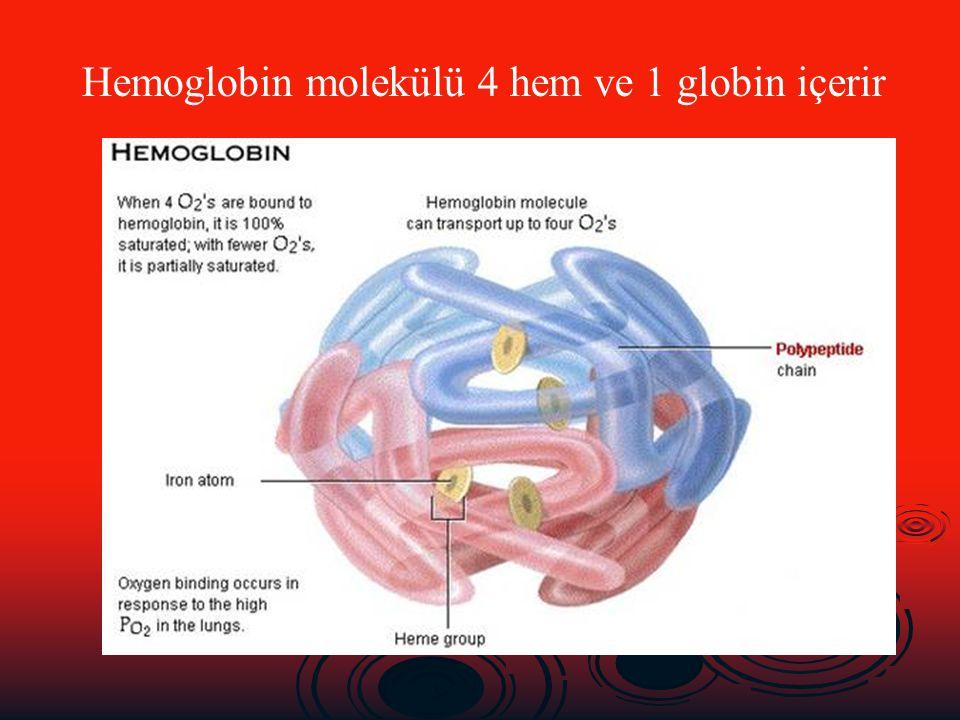 Hemoglobin molekülü 4 hem ve 1 globin içerir