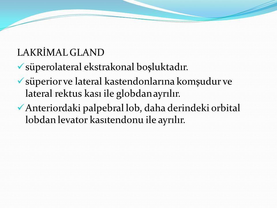 LAKRİMAL GLAND süperolateral ekstrakonal boşluktadır. süperior ve lateral kastendonlarına komşudur ve lateral rektus kası ile globdan ayrılır.