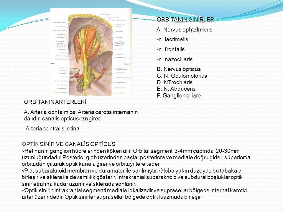 ORBİTANIN SİNİRLERİ A. Nervus ophtalmicus. -n. lacrimalis. -n. frontalis. -n. nazociliaris. B. Nervus opticus.
