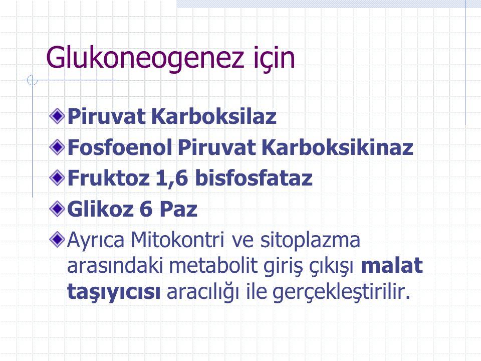 Glukoneogenez için Piruvat Karboksilaz Fosfoenol Piruvat Karboksikinaz