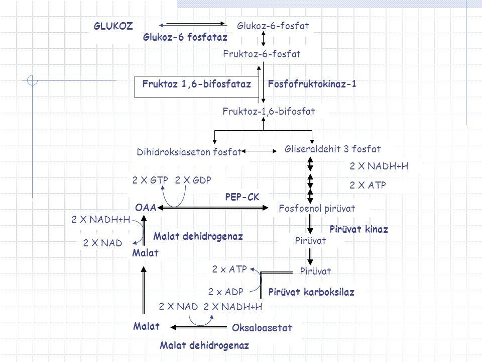GLUKOZ Glukoz-6-fosfat. Glukoz-6 fosfataz. Fruktoz-6-fosfat. Fruktoz 1,6-bifosfataz. Fosfofruktokinaz-1.