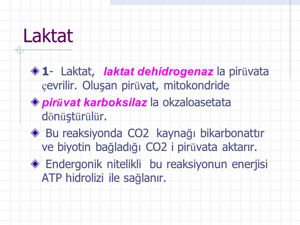 Laktat 1- Laktat, laktat dehidrogenaz la pirüvata çevrilir. Oluşan pirüvat, mitokondride. pirüvat karboksilaz la okzaloasetata dönüştürülür.