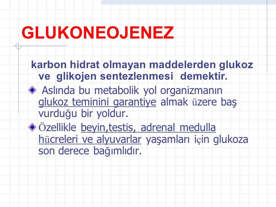 GLUKONEOJENEZ karbon hidrat olmayan maddelerden glukoz ve glikojen sentezlenmesi demektir.