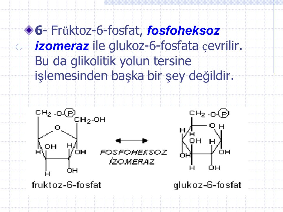 6- Früktoz-6-fosfat, fosfoheksoz izomeraz ile glukoz-6-fosfata çevrilir.