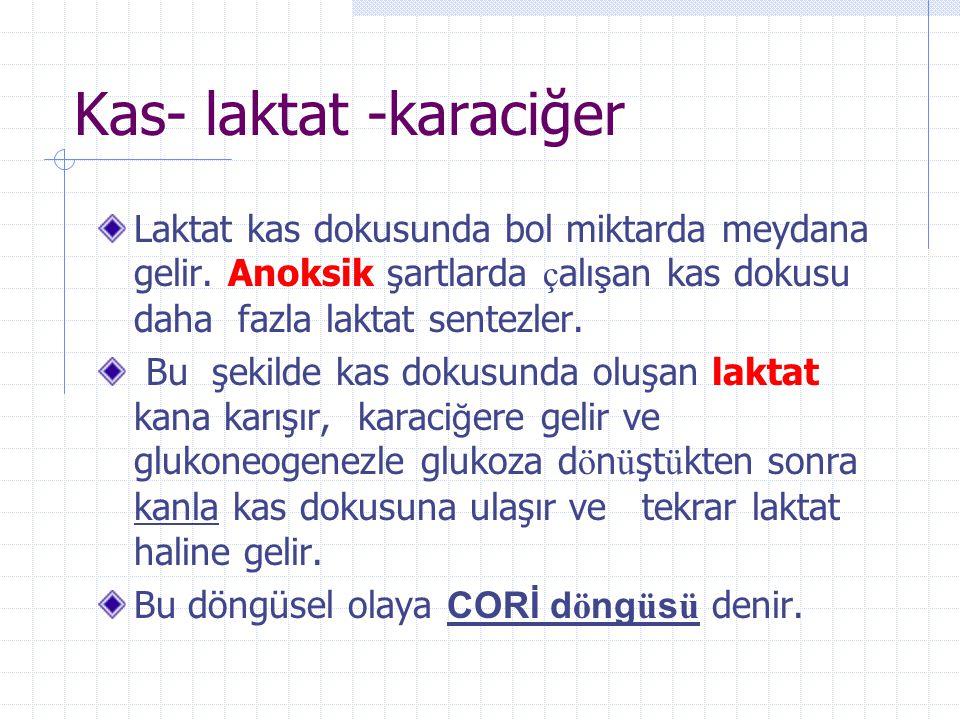 Kas- laktat -karaciğer