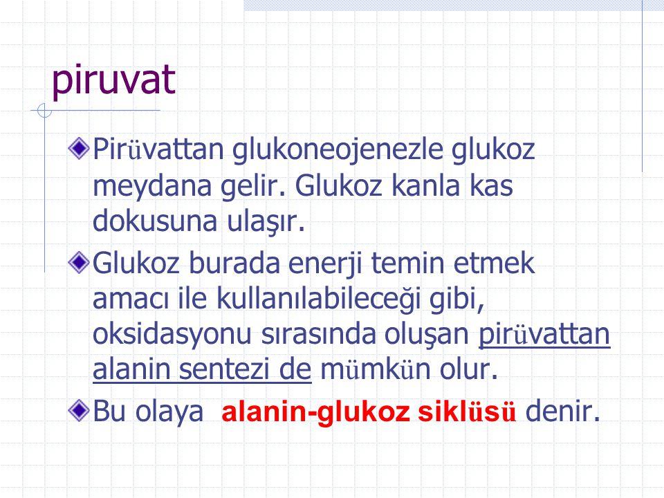 piruvat Pirüvattan glukoneojenezle glukoz meydana gelir. Glukoz kanla kas dokusuna ulaşır.