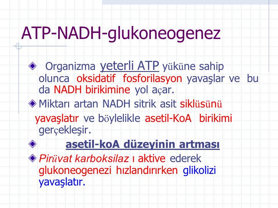 ATP-NADH-glukoneogenez