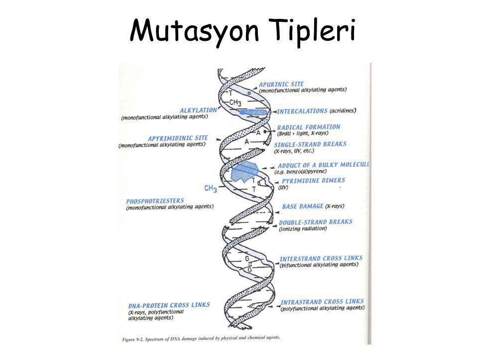 Mutasyon Tipleri
