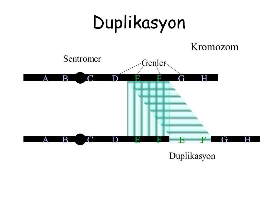 Duplikasyon Kromozom Sentromer A B C D E F G H Genler