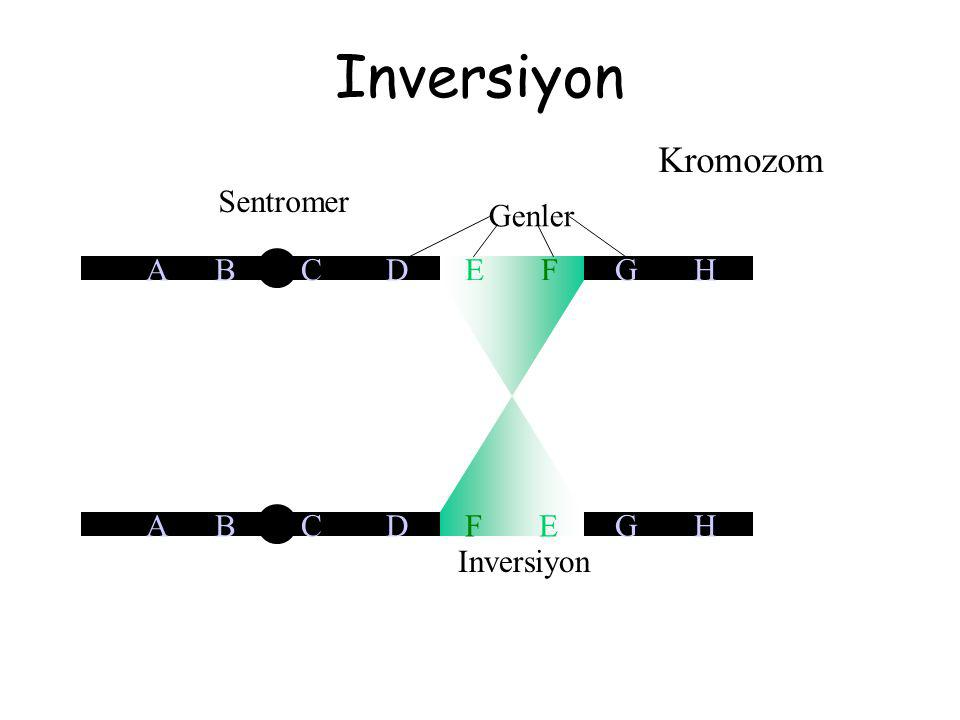 Inversiyon Kromozom Sentromer Genler A B C D E F G H A B C D F E G H