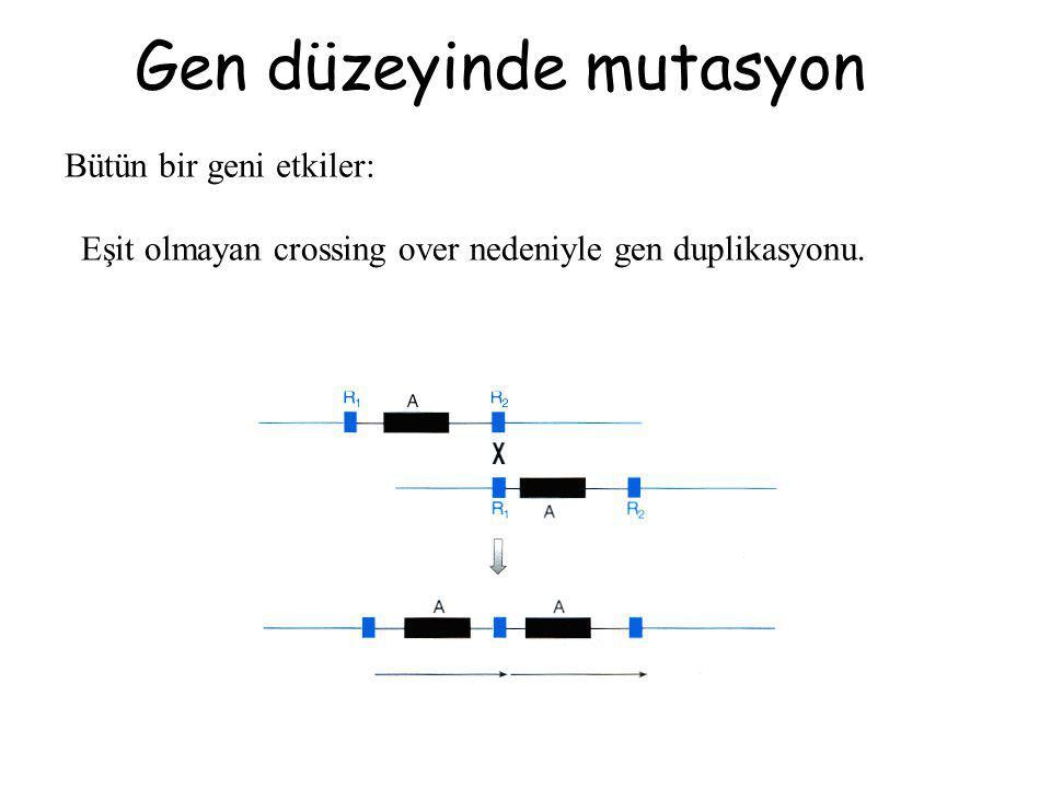 Gen düzeyinde mutasyon