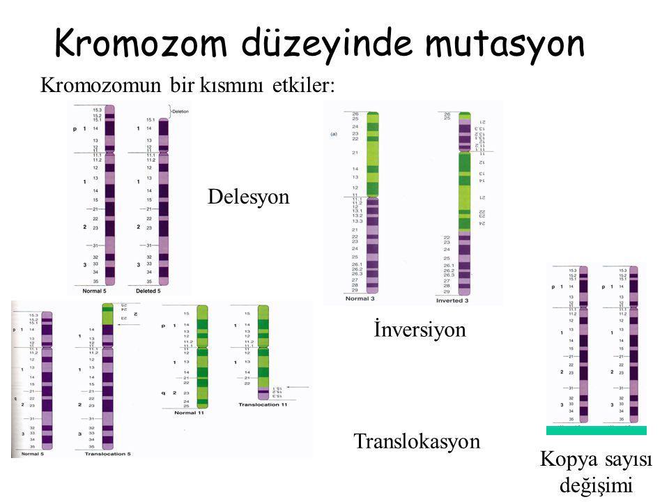 Kromozom düzeyinde mutasyon