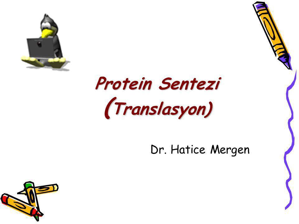Protein Sentezi (Translasyon)