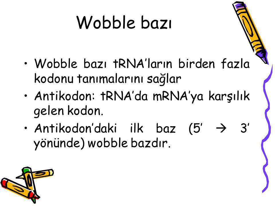 Wobble bazı Wobble bazı tRNA'ların birden fazla kodonu tanımalarını sağlar. Antikodon: tRNA'da mRNA'ya karşılık gelen kodon.