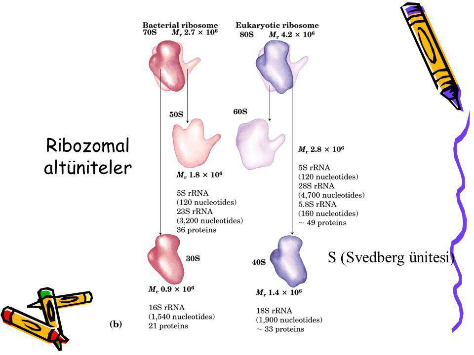 Ribozomal altüniteler