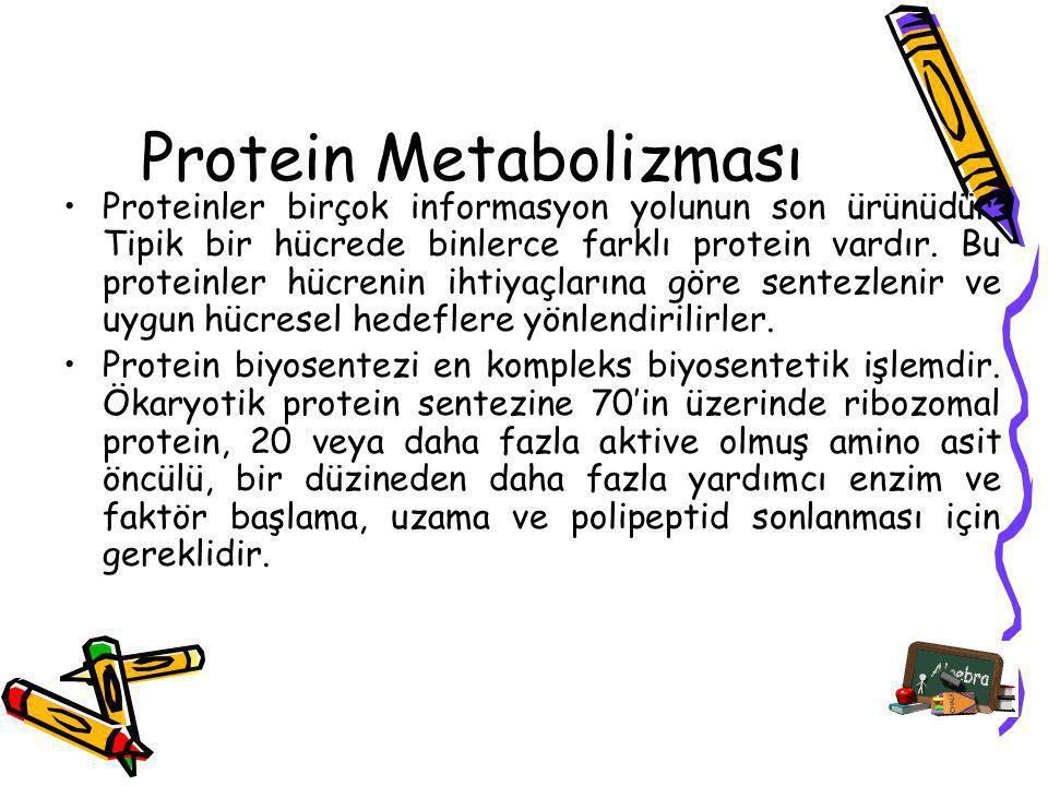 Protein Metabolizması