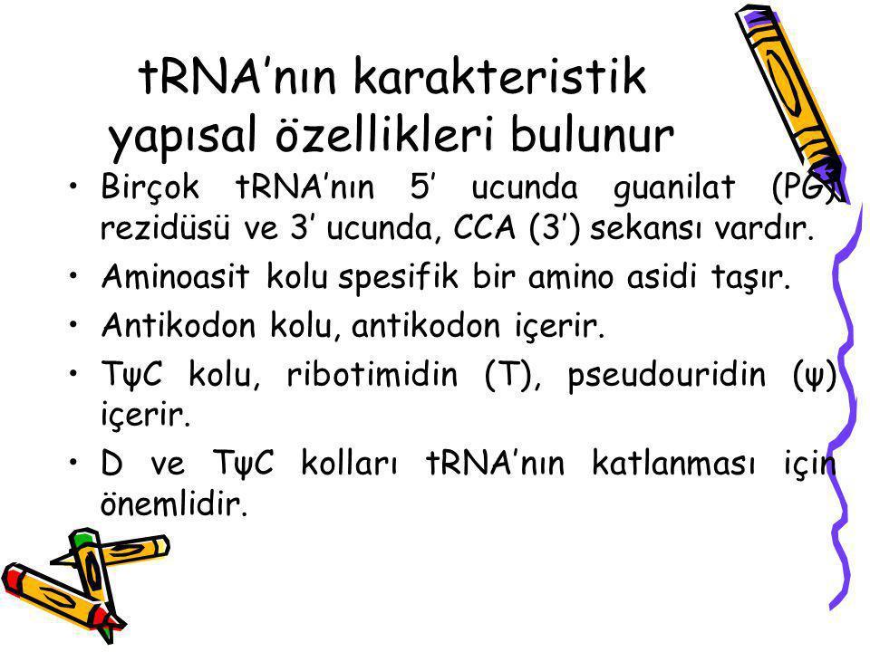 tRNA'nın karakteristik yapısal özellikleri bulunur