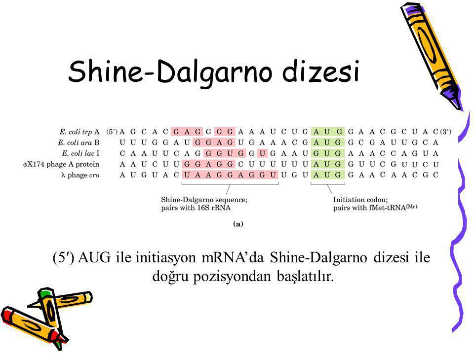 Shine-Dalgarno dizesi